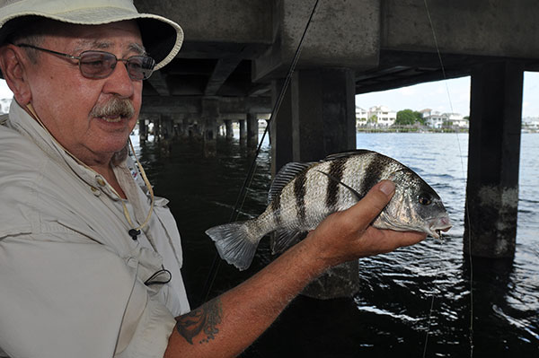 Paul Genovese caught this black drum while fishing beneath a bridge. He used a fiddler crab as bait.