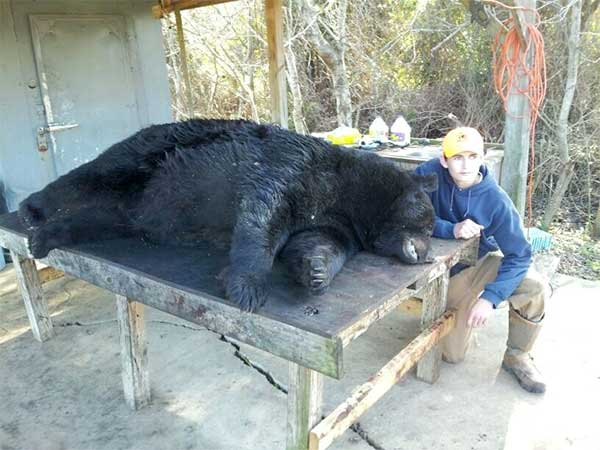 David Honeycutt Jr. took this 784-pound black bear on Dec. 18, and it is now North Carolina's second-place bear by weight.