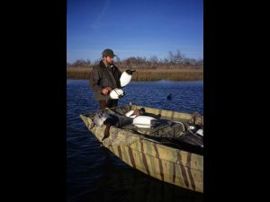 Canvasback,  hunter with decoys