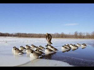 Canada goose decoys on ice